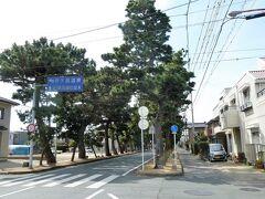 住宅街の中をしばらく歩くと東海道に出ると松林が現れました。 340本の松並木が約700m続いているとのことです。