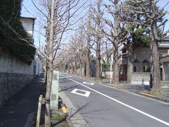 有名な銀杏並木道です。
