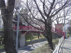 桜坂です。