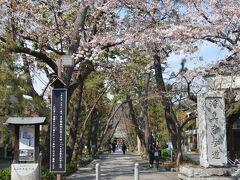 九品仏浄心寺 参道  九品仏浄心寺にも何度か来たはずだが全く覚えていない。 桜も見た記憶が無いので、初めて来たようなものだ。