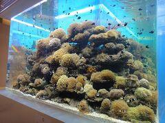 クレッセントモールの熱帯魚水槽です。立派なので来るたびに写真を撮ってる気がします。