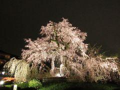 円山公園の大枝垂れ桜  散りかけの頃に来た去年と違い 左右に大きく広がった枝垂れは 春の京都を代表する「絶景」  また来年も見に来たいものだ