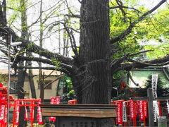 大きな公孫樹があったり、いい雰囲気です。