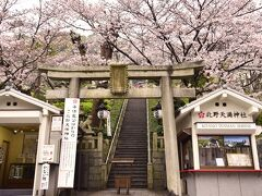 神戸の地に咲き広がる満開な桜の風景を早速見つけましたよ~ 北野天満神社にやって来ました