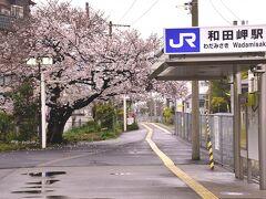 というわけで、やって来ましたのは夕方の和田岬駅 おお~!駅前に広がる見事な桜色の風景! ここでも満開の桜が咲き広がる素敵な春色の風景を見つけました~