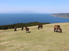 さらに登り、少し上から馬たちを眺めます。