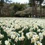 念願のネモフィラの花畑と筑波山