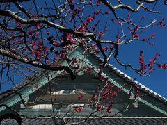 【2017/02/11 宝戒寺(鎌倉市)】  鶴岡八幡宮を出て、宝戒寺に来ました。  「梅は枝ぶりを撮るもの」と 聞いたことがありますが… 枝ぶりって何ぞや(・・?)