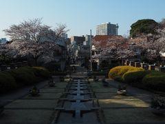 【2017/04/04 元町公園(横浜市中区)】  今年の桜には悩まされましたね。  ようやく休日と好天が重なってくれましたが 満開にはあと一歩でした(>_<)