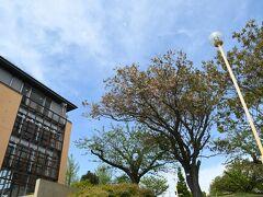 かみね公園の敷地内には様々な施設が点在しています。 これもそのひとつ吉田正音楽記念館 日立市出身で昭和の歌謡曲に大きな足跡を残しました。