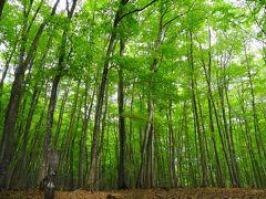 樹齢約90年のブナ林 美人林(びじんはやし)