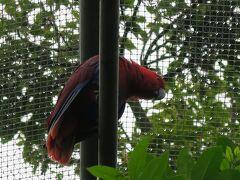 午後からは、アデレード動物園です。