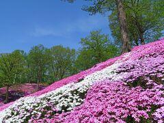 その前の東藻琴の芝桜と、道東の美しい景色を十分に見ることができました。 これから北海道は美しい季節がやってきますので、いろいろと訪問してみたいです。