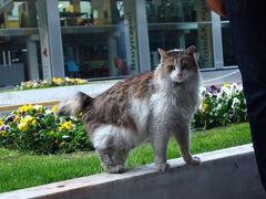 少し休んでから、 タクシム広場周辺で夜ゴハン。  ホテル周辺にウロウロしてる猫。