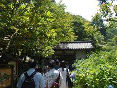 北鎌倉駅から明月院へ  朝10時過ぎだが、こちらも凄い人出である。 参道が人だかりで見えない。