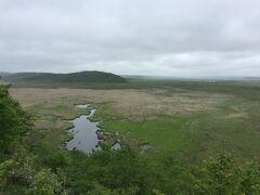 のどかな湿原が現れます。