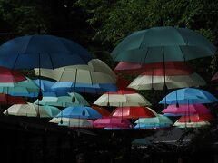ハルニレテラスに到着。 色とりどりの傘が楽し気です。