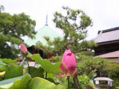 本覚寺 境内の蓮の花 12:40頃  こちらの蓮の花は鉢植えです。 バックの建物は夷堂。  こちらには、立派な百日紅の木がありますが、まだ花は咲いていませんでした。 (ちょっと遅いかも?)