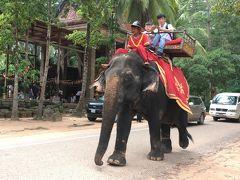 歩かないで象に乗るリッチな人達!