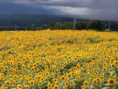 ひまわり畑到着。雨は降っていなかったんだけど、今にも降りそうなどんより天気。 でもちょうどひまわり畑を照らすように日が差してきた。ラッキー!