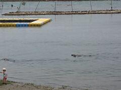 イルカに触ろう!という催しをやっており、2頭のイルカが間近に泳いでいました。