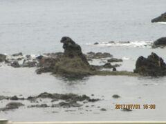 こちらはゴジラ岩。背中が寂しそう。  野球の松井選手は石川のご出身だけど、  ニックネームのゴジラはここから来たの?