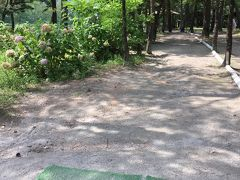 電車の時間までは、グリーンスポーツの森でマレットゴルフに再挑戦です。  前回は子供が途中で飽きてしまい18ホール回れませんでしたが、今日は最後まできっちり。 普通のゴルフですら未経験なのにバーディーを取れるホールもあり、まずまずの成績でした。