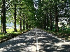 マキノ高原の手間に有名な「メタセコイア並木道」があります。 今回は夏に行ったので、青々としたメタセコイア木が両サイドに! とてもきれいで、写真撮影をしている人もたくさんいました。 今度は、是非秋の紅葉の季節に来てみたいです!