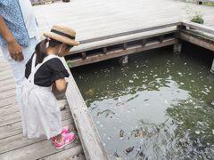 タリアセンに行きます。 タリアセンには、鯉がたくさんいます。 が、きれい…ではありません。 はっきり言って気持ち悪い。  でも、そのキモさに笑えます。