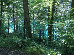アルプ湖が出てきました。 木々の間から見えるブルーの湖水に目を奪われました。