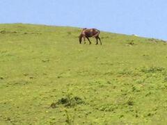 都井岬で都井馬に癒される。