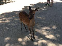 奈良公園、春日大社に着いたら早速鹿さんのお出迎え。奈良感! せんべい持ってないよ!