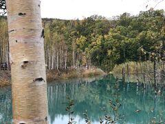白髭の滝から少し下るとApple社のパソコンの壁紙で一躍有名になった「青い池」 この日は曇りで日が差さず青さも今ひとつ