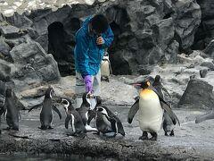 旭山動物園では、もぐもぐタイムで色々な動物たちの餌やりを見ることができました