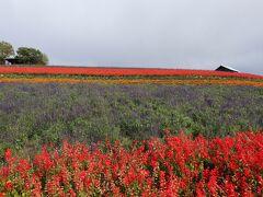 トマムに向かう道中、富良野の「かんのファーム」の畑も色彩鮮やか