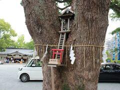 加藤神社には初めてきました。 ちなみに、市内のあちこちに巨木のあった楠は、熊本県の木だそうな。