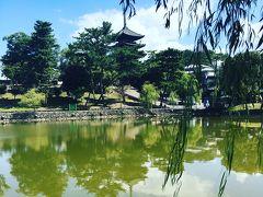 翌日は興福寺。猿沢池からの五重塔は鉄板!