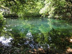 その次は「丸池様」に参りました。 吹浦口の宮、蕨岡口の宮双方から離れてはおりますが、大物忌神社の「境内地」にあたり、動植物の採集が禁じられておる聖域です。 気分はもう白神山地の「青池」にまで吹き飛ばされたような感じであります。 澄み渡るブルーはサファイアを彷彿とさせます。 この辺りは鳥海山からの清らかな水が湧き、川には梅花藻が繁殖しており、秋になると鮭が遡上してくるそうです。 タクシーのコースにこちらは入っていなかったのですが、スケジュールが早く進んだので参ることができました。