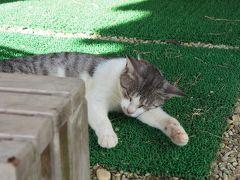 工作の後は、また休憩! 車で5分くらいの宮良農園にて、グアバジュースをいただきます!(ほかにも島バナナなどのジュースがありました)注文口付近にいた看板猫?ちゃんです。
