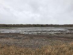 野付半島のほぼ真ん中あたりに、「ナラワラ」が見られるポイントがあります。 ナラワラとは、ミズナラなどが、海水の浸食によって立ち枯れたものだそうです。 ちょうど、駐車スペースが設けられているので、鑑賞しやすくなっていました。