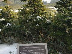 八甲田ロープウェイで登ると一面の雪 遊歩道は30分の短いコースしか歩けなかった