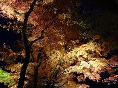 いろは坂を下りて、輪王寺の逍遥園のライトアップへ。