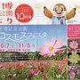 台風21号の被害にあった「花の丘・コスモス」の現状を知りたくて、大阪万博記念公園へ行ってきました。(2017)