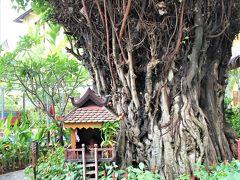 今回シェムリアップで宿泊したラ リヴィエレ ダンコールの中庭にある神木と祠