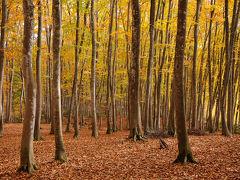 その前に、すぐ近くにある美人林へ立ち寄ってみた。 ちょうど紅葉が見ごろで、名前の通り、それは美しい林だった。