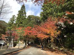 岐阜の紅葉スポット『大矢田もみじ谷神社』です。 見頃まであと少しですが、こんな感じです。 ヤマモミジが3000本だそうです。