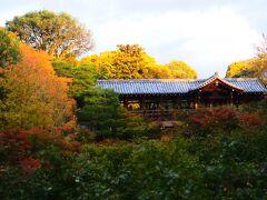 東福寺。  夕陽を受けて赤く見ますが紅葉は月末かな。
