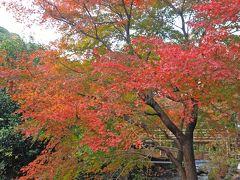 (ノ´▽`)ノオオオオッ♪熱海梅園ではじめてみた紅葉。