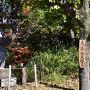 臥龍池と土岐川の間にある池の周りの紅葉も見事だと想い。 土岐川畔の丘陵から多治見市を見渡す永保寺を訪ねてみました。  虎渓山 永保寺(こけいざん えいほうじ) 11月中旬〜下旬が見ごろ 飛騨・美濃紅葉33選にも選ばれた紅葉