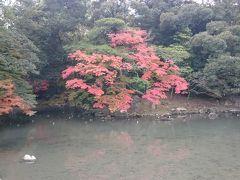 延養亭の前の「花葉の池」 名前の通り紅葉が🍁